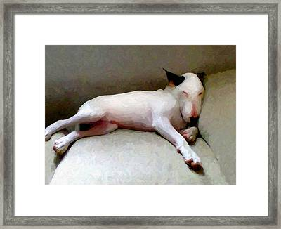 Bull Terrier Sleeping Framed Print by Michael Tompsett