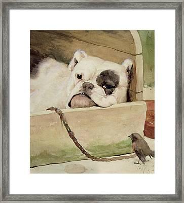 Bulldog Framed Print by Cecil Charles Windsor Aldin