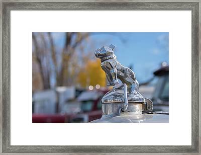 Bulldog Framed Print by Guy Whiteley