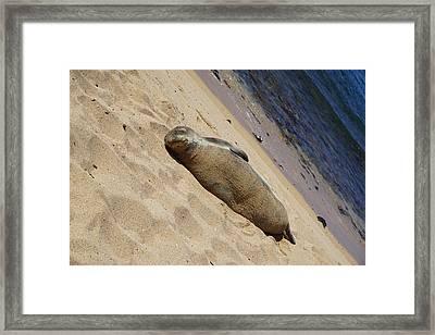 Bullie Of The Sea Framed Print by Beth Wickham
