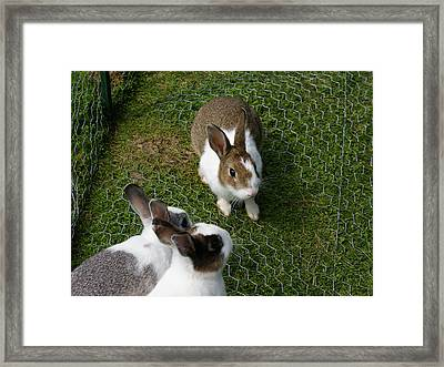 Bunnies Framed Print by Lisa Hebert