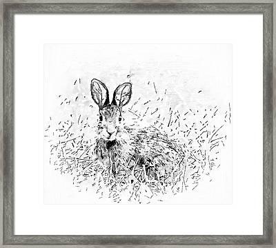 Bunny - Black And White Framed Print by Kerri Farley