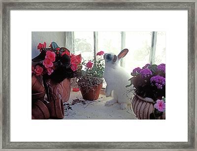 Bunny In Window Framed Print by Garry Gay