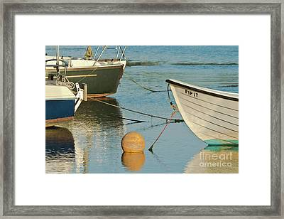 Buoy Pipit Framed Print by Terri Waters