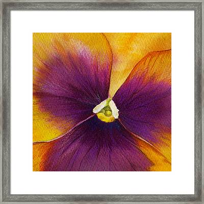 Burgundy Yellow Pansy Framed Print by Mindy Lighthipe