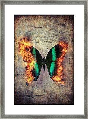 Burning Butterfly Framed Print by Garry Gay