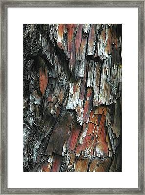 Burnt Tree Abstract Framed Print by Joseph Smith