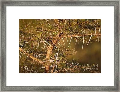 Bush Stinger Framed Print by Andy Smy