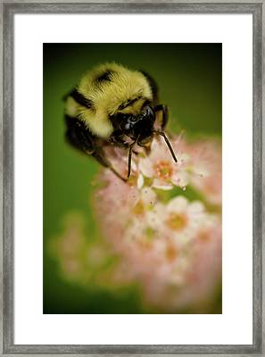 Busy Bee Framed Print by Sebastian Musial