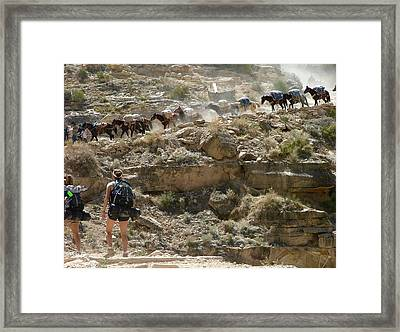Busy Day On Havasu Canyon Trail Framed Print by Brent Sisson