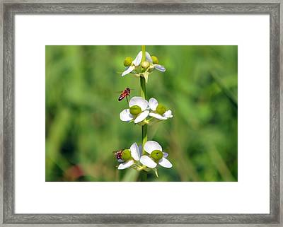 Busy Little Bees Framed Print by Kala King