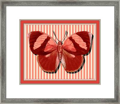 Butterfly 24 Framed Print by Robert Todd