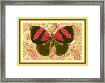 Butterfly 26 Framed Print by Robert Todd