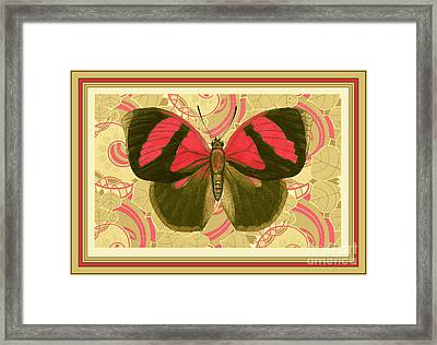 Butterfly 27 Framed Print by Robert Todd