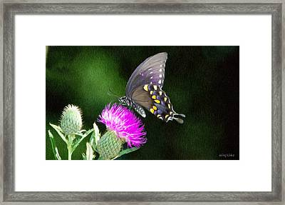 Butterfly And Thistle Framed Print by Jeff Kolker