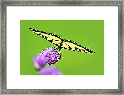 Butterfly Art Of Balance Framed Print by Christina Rollo