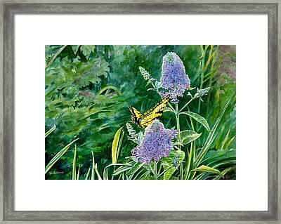 Butterfly Bush Framed Print by Tom Hedderich