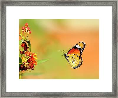 Butterfly Framed Print by Chronowizard Gasikara