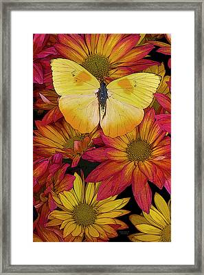 Butterfly Detail Framed Print by JQ Licensing