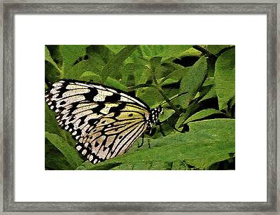 Butterfly Fresco Framed Print by Mindy Newman