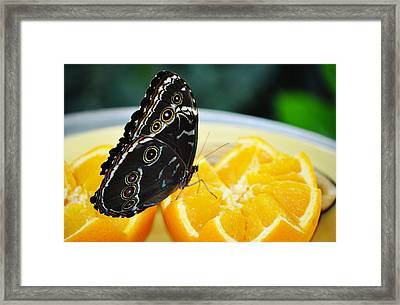Butterfly Haven Citrus Framed Print by Kyle Hanson