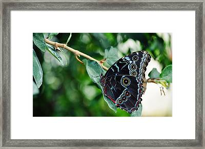 Butterfly Haven Framed Print by Kyle Hanson