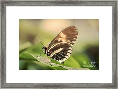 Butterfly In The Fog Framed Print by Sebastien Coell