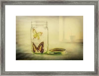 Butterfly Jar Framed Print by Bob Orsillo