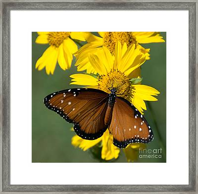 Butterfly Kisses Framed Print by Charles Dobbs