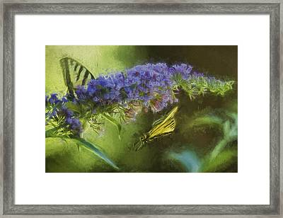 Butterfly Play Framed Print by Belinda Greb