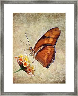 Butterfly Framed Print by Savannah Gibbs