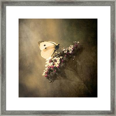 Butterfly Spirit #01 Framed Print by Loriental Photography