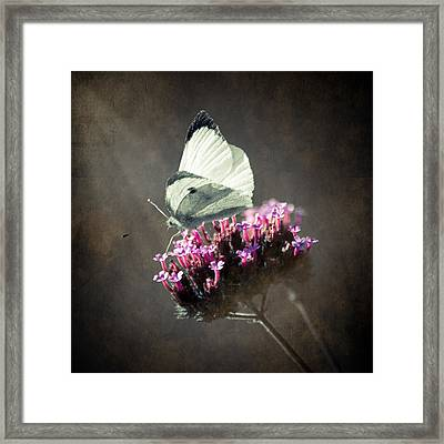 Butterfly Spirit #02 Framed Print by Loriental Photography