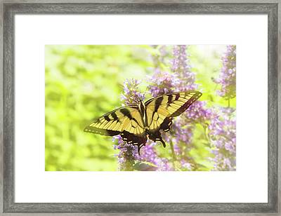 Butterfly - Swallowtail - Hard To Swallow Framed Print by Mike Savad