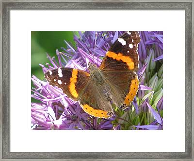 Butterfly With Allium Framed Print by Alfred Ng
