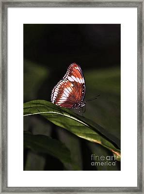 butterfly X Framed Print by Tom Prendergast
