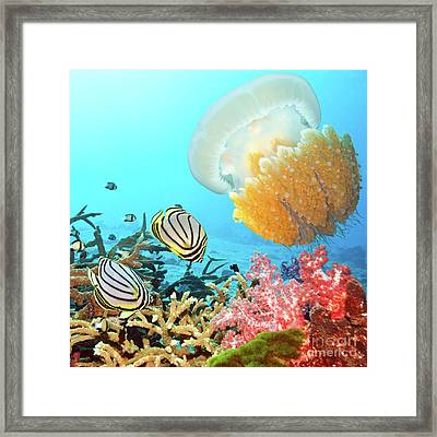 Butterflyfishes And Jellyfish Framed Print by MotHaiBaPhoto Prints