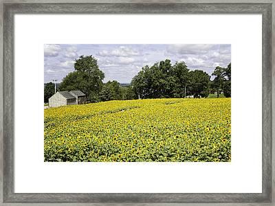 Buttonwood Farms Framed Print by Fran Gallogly