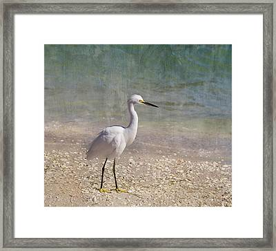 By The Sea Framed Print by Kim Hojnacki