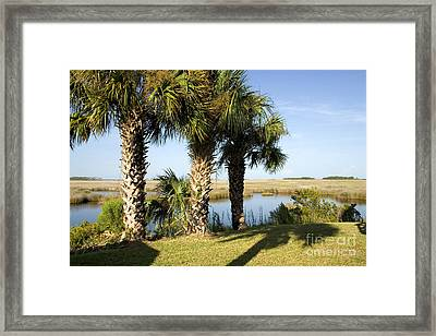 Cabbage Palmetto Trees Framed Print by Inga Spence