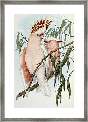 Cacatua Leadbeateri Framed Print by John Gould