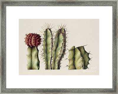 Cacti Framed Print by Annabel Barrett