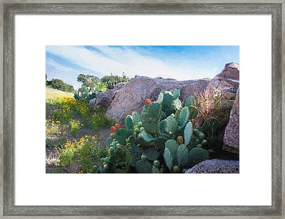 Cactus And Granite    9234 Framed Print by Fritz Ozuna