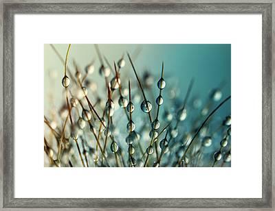 Cactus Craze II Framed Print by Sharon Johnstone