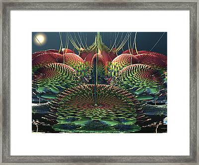 Cactus Flowers Framed Print by Mary Almond