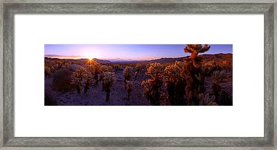 Prickly Framed Print by Chad Dutson