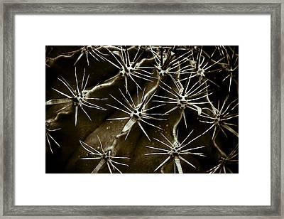 Cactus Framed Print by Frank Tschakert