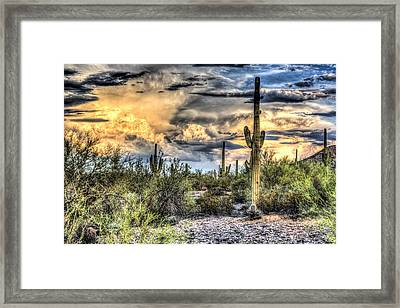 Cactus Galore Framed Print by Jon Berghoff