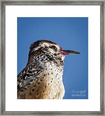 Cactus Wren Profile Framed Print by Robert Bales