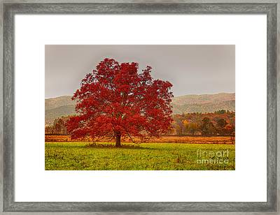 Cades Tree After The Rain Framed Print by Geraldine DeBoer
